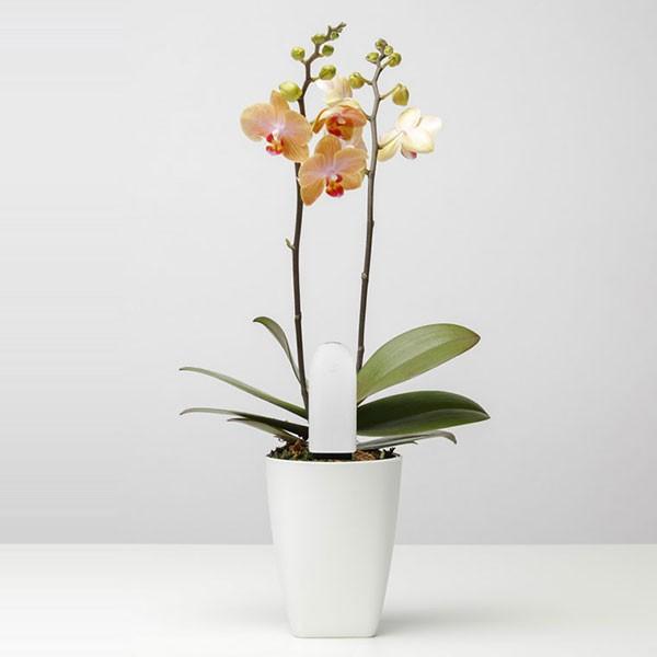 سنسور-نظارت-بر-گل-گیاه-شیائومی